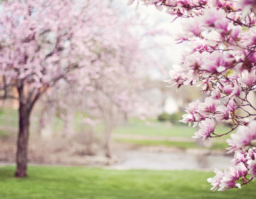 efectes-primavera-en-el-teu-descans
